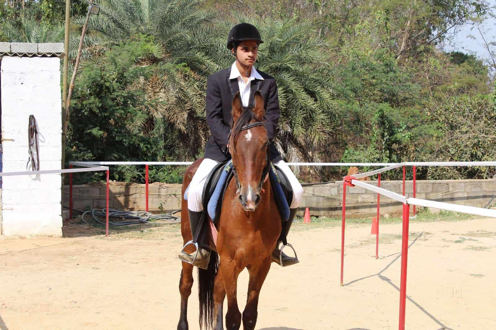 Top 10 Horse Riding In Mysore Road Best Horse Ride Training Justdial