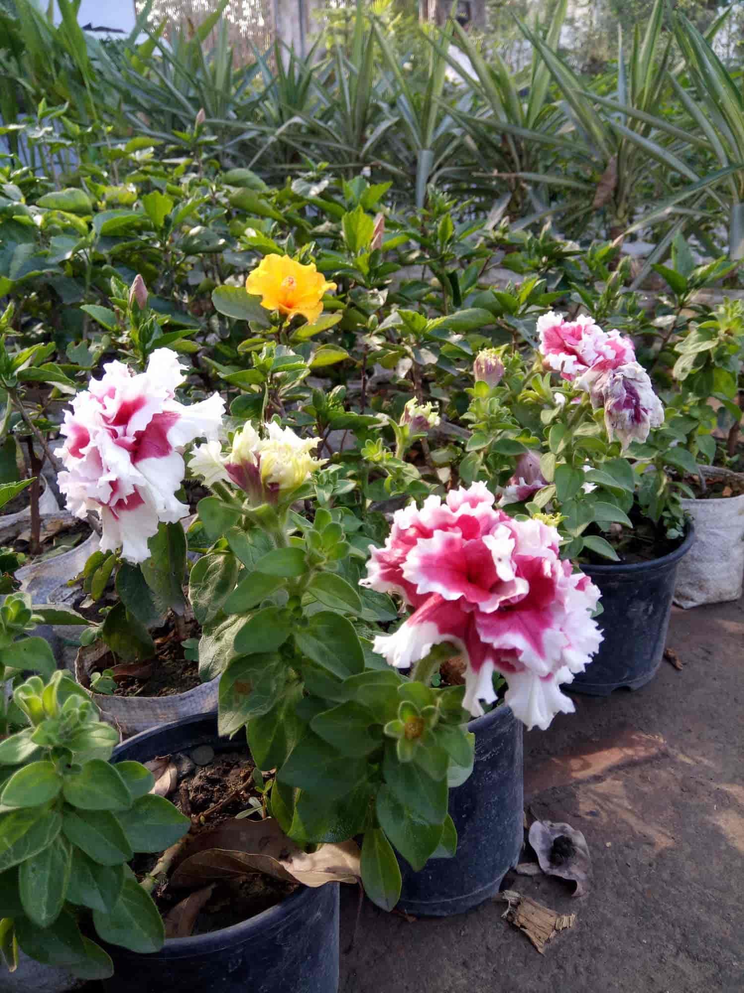 Plant Nurseries In Trans Yamuna Colony