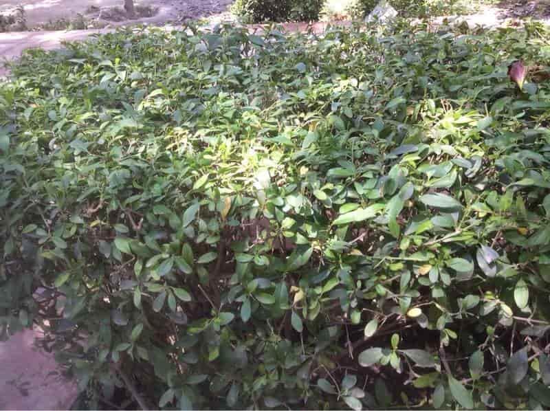 Top Tree Nurseries In Agra Cantt Best