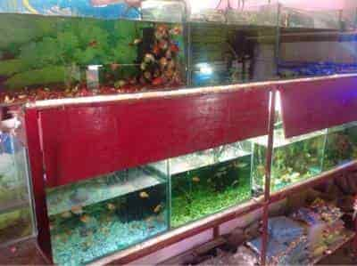 Top 30 Fish Aquarium Dealers In Agra Ho Best Fish Aquarium Shops Justdial