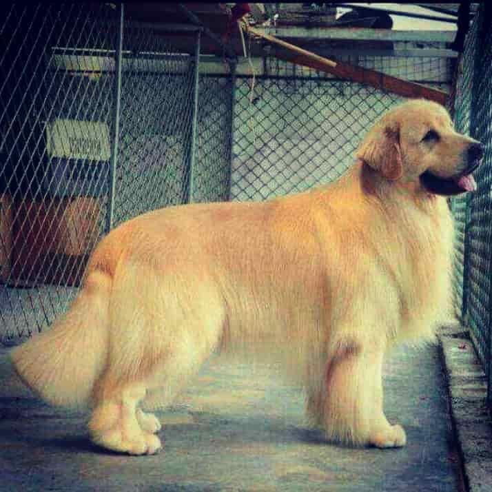 Top 50 Pet Shops For Pomeranian Dog In Ahmedabad Best Pet Shops