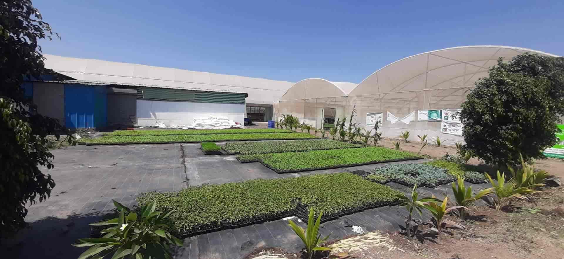 Top 100 Plant Nurseries In Ahmednagar Best Nursery Plant Suppliers Justdial