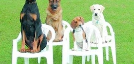 Top 100 Dog Training Centres in Bangalore - Best Pets