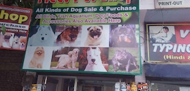 Top 10 Pet Shops in Bhiwani - Best Pet Store & Suppliers