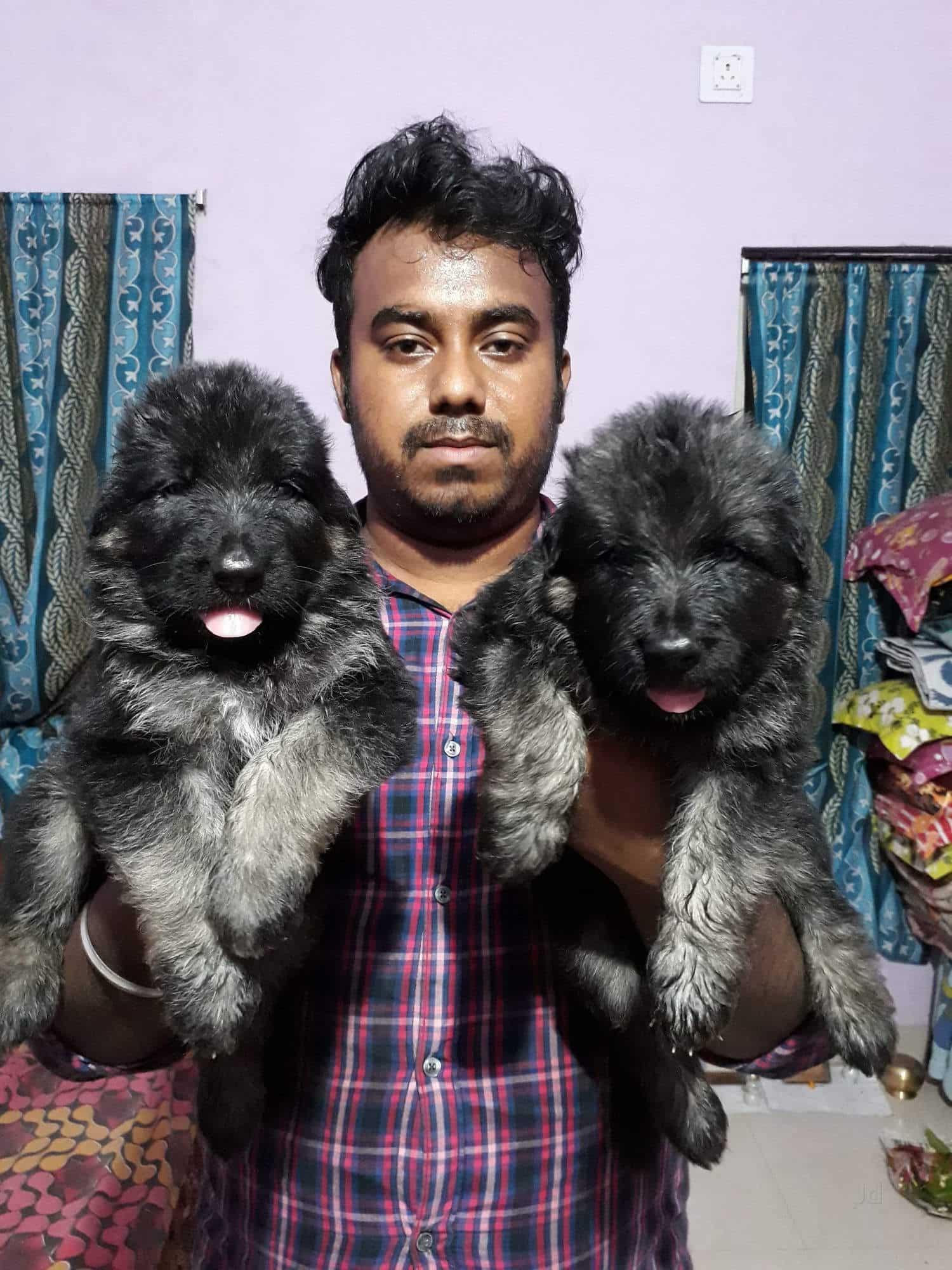 Odisha Dog & Puppy House, Niladri Vihar - Pet Shops in