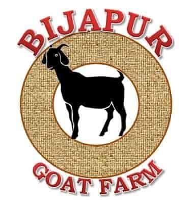 Bijapur Goat Farm, Bijapur - Goat Farming in Bijapur