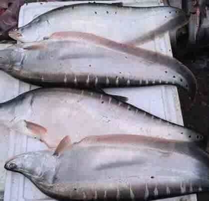 Ahmad Hashan Fish Merchant