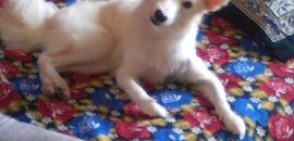 Top 20 Dog Adoption Centres in Adyar - Best Dog Adoption