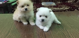 Top 10 Pet Shops For Dog in Tambaram - Best Pet Store - Justdial
