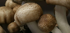 Top 10 Mushroom Cultivation Classes in Chennai - Best