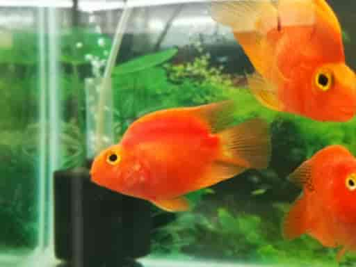 Rs Aquarium Pets Adyar Aquarium Accessory Dealers In Chennai Justdial