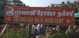 Top Adenium Plant Wholesalers in Narasimhanaickenpalyam