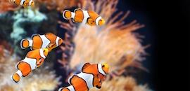 Top Aquarium Characin Swordtail Tetra Fish Dealers In Adyar Chennai Justdial