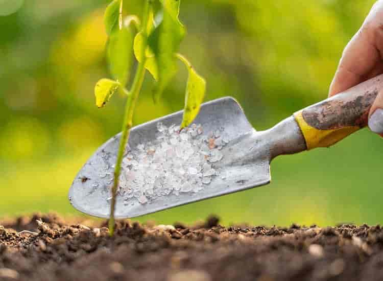 Top 10 Bio Fertilizer Dealers In Ajmer Best Biofertilizer Dealers Justdial