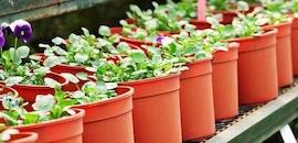 Top 30 Plant Nurseries in Cheramangalam - Best Nursery Plant