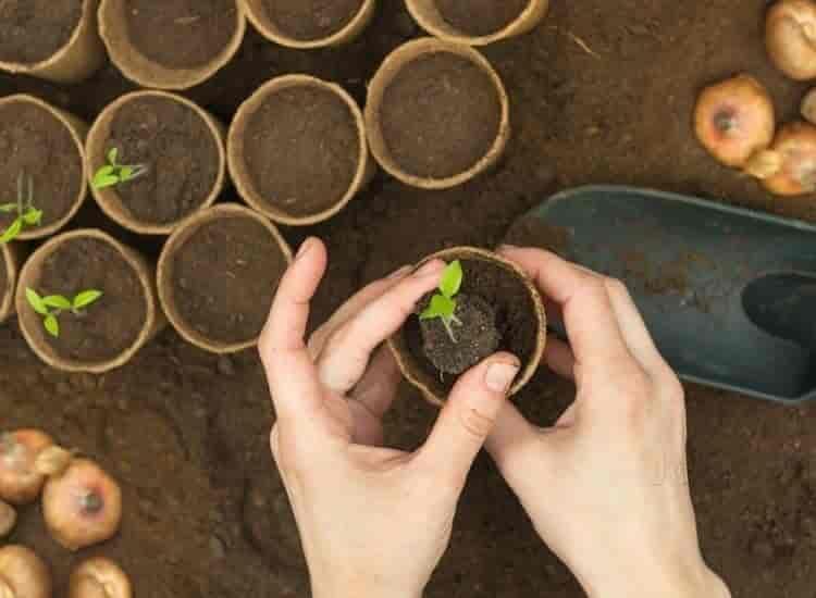 Top 100 Plant Nurseries In Ramanagara Best Nursery Plant Suppliers