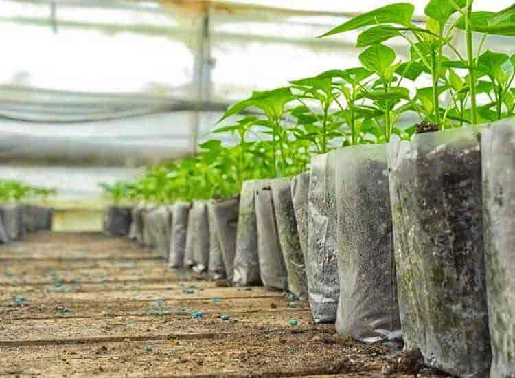 Top 20 Plant Nurseries in Satellite - Best Nursery Plant Suppliers  Ahmedabad - Justdial