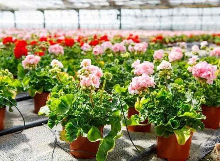Top 100 Plant Nurseries In Lucknow