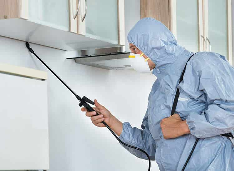 Pest Control Enterprise Opportunities এর ছবির ফলাফল