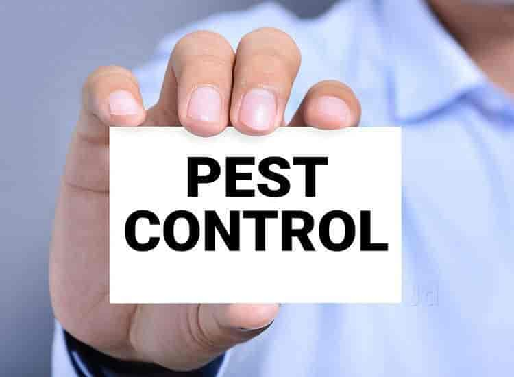 Pest Control Services: Your Best Offense against Annoying and Bothersome Pests