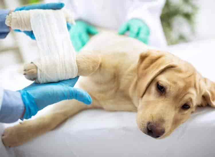 Top 10 Veterinarians in Raipur-Chhattisgarh - Best