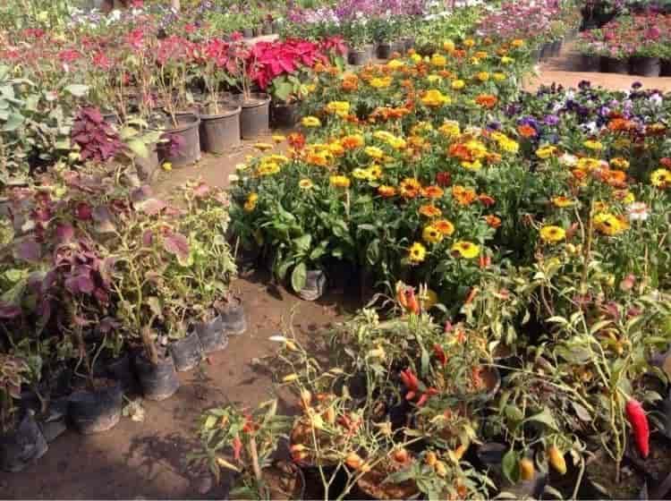 Royal Green Garden Nursery