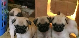 Top Pet Shops in Neemuch - Best Pet Store & Suppliers - Justdial