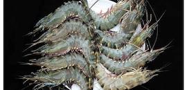 Top 100 Seafood Exporters in Kochi - Best Sea Food Exporters