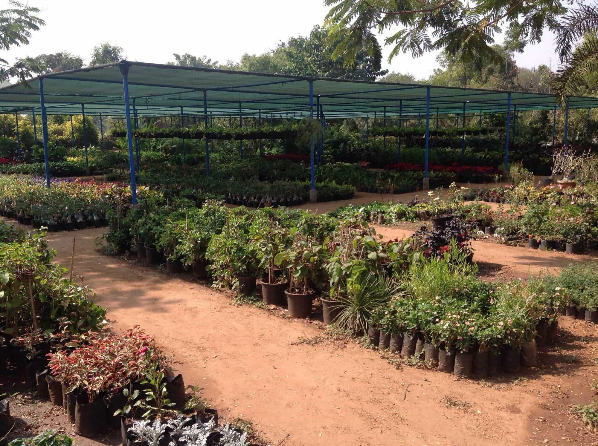 Top Tree Nurseries In Sargasan Best