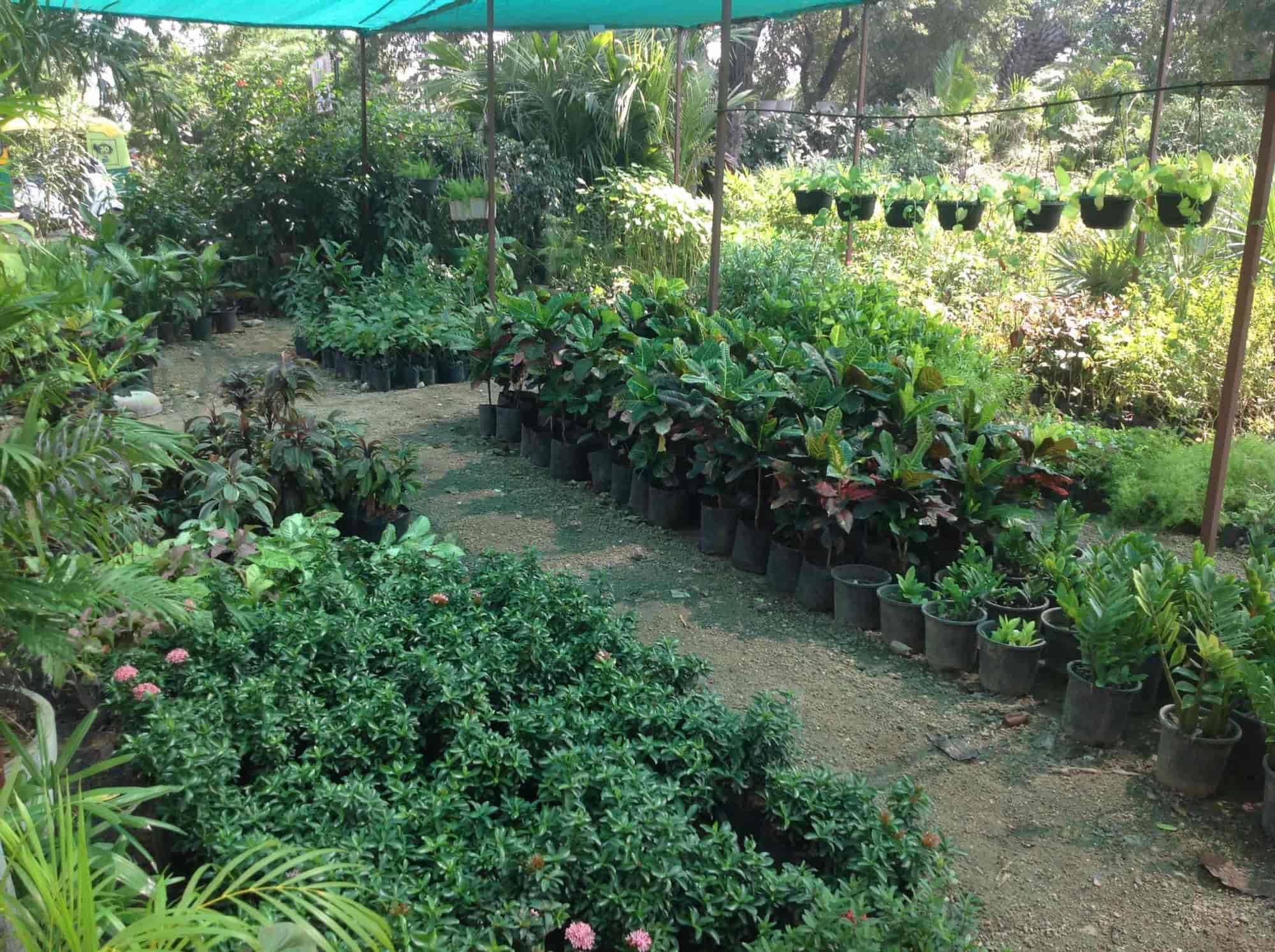 Top Plant Nurseries In Vavol Best