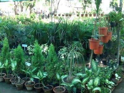 Top Plant Nurseries In Koba Best