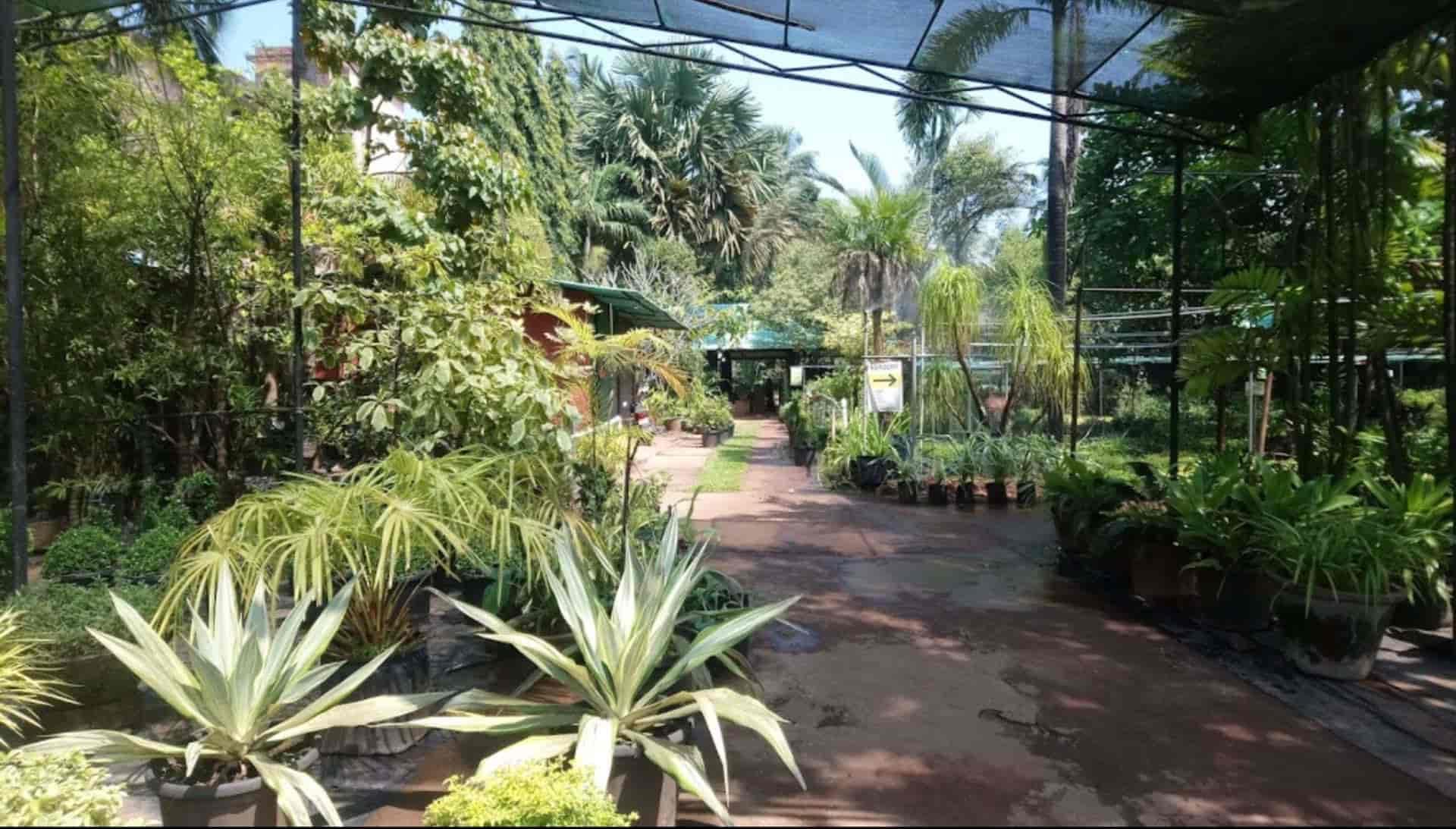 mr farmer india pvt ltd, gurim - plant nurseries in goa - justdial