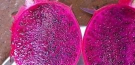 Top Avocado Wholesalers in Goa - Best Avocado Fruit