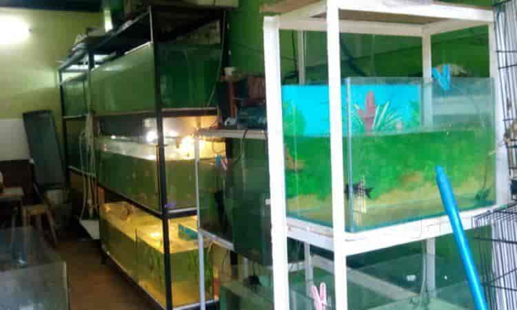 Abyss Marine Fish Aquarium In Goa Justdial