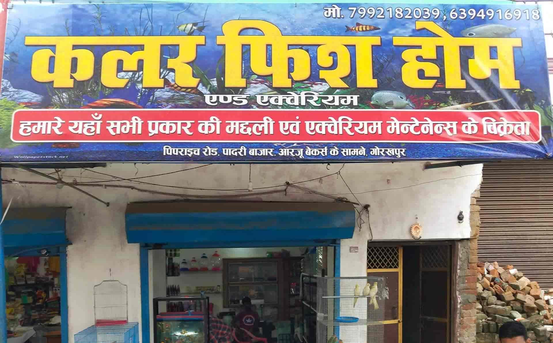 Top 10 Pet Shops For Rabbit in Gorakhpur - Best Pet Stores