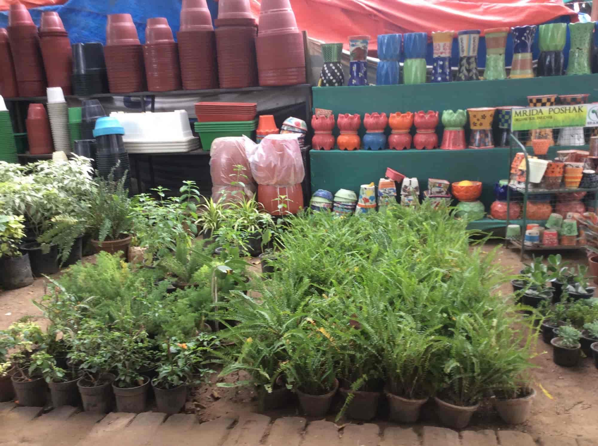india evergreen nursery, sikanderpur ghosi - plant nurseries in