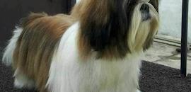 Top 50 Pet Shops For Pomeranian Dog in Hyderabad - Best Pet