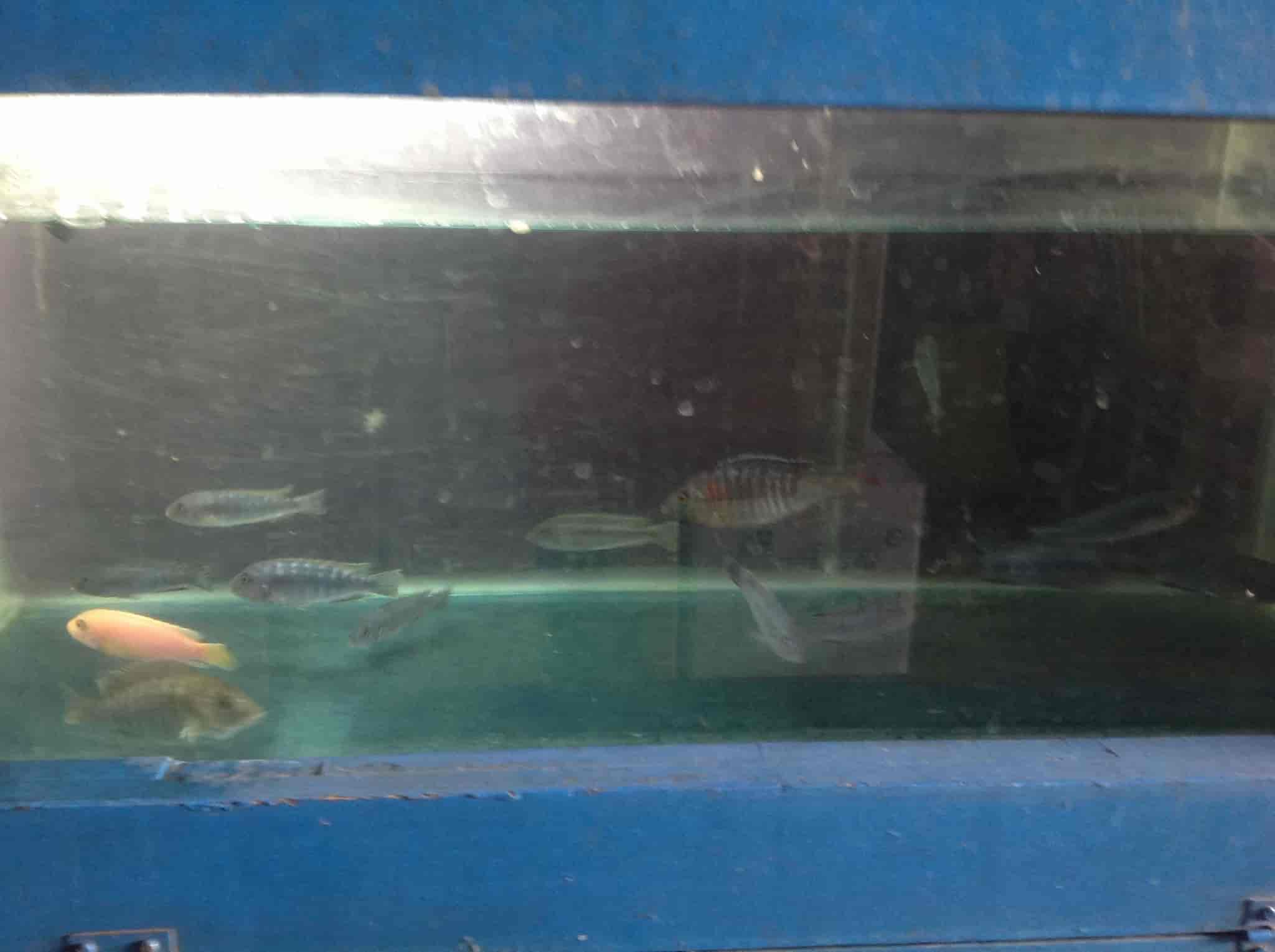 S N Aquarium And Pets, Gopanpally Gachibowli - Pet Shops in