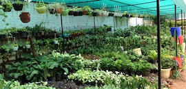 Top Bonsai Plant Dealers in Picket-Secunderabad, Hyderabad