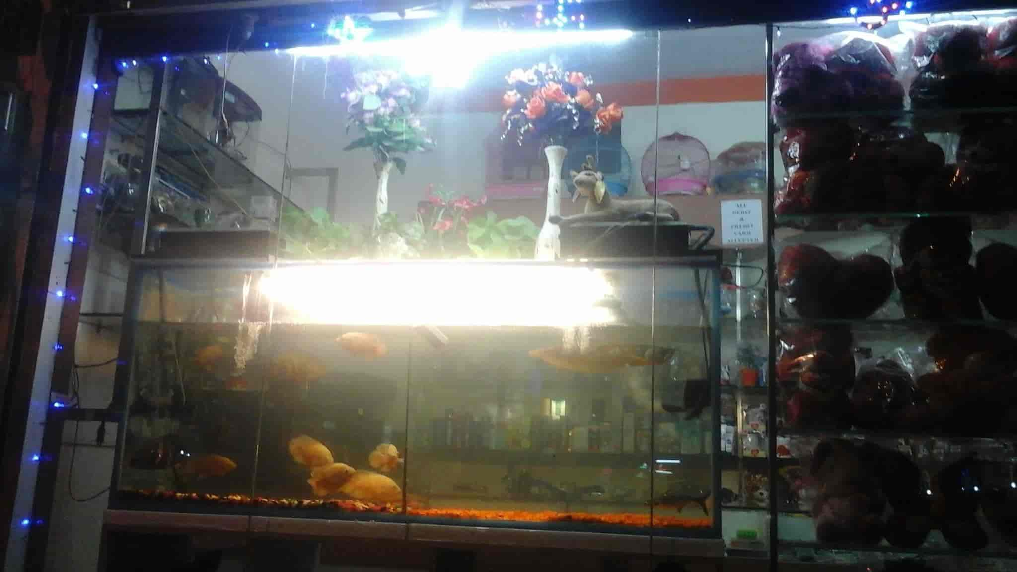 dkb aquarium