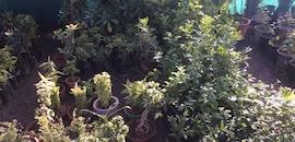 Shyam Nursery
