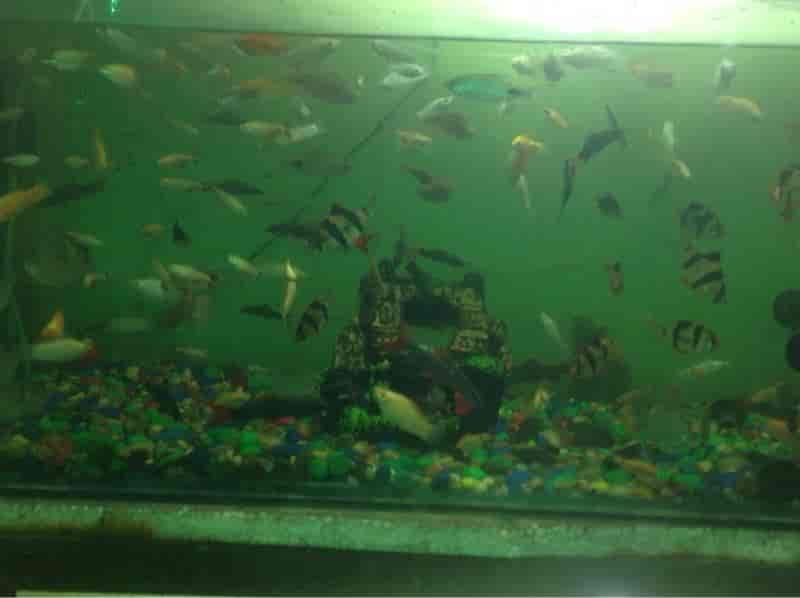 Top 100 Aquarium Fish Wholesalers In New Market Kolkata Justdial