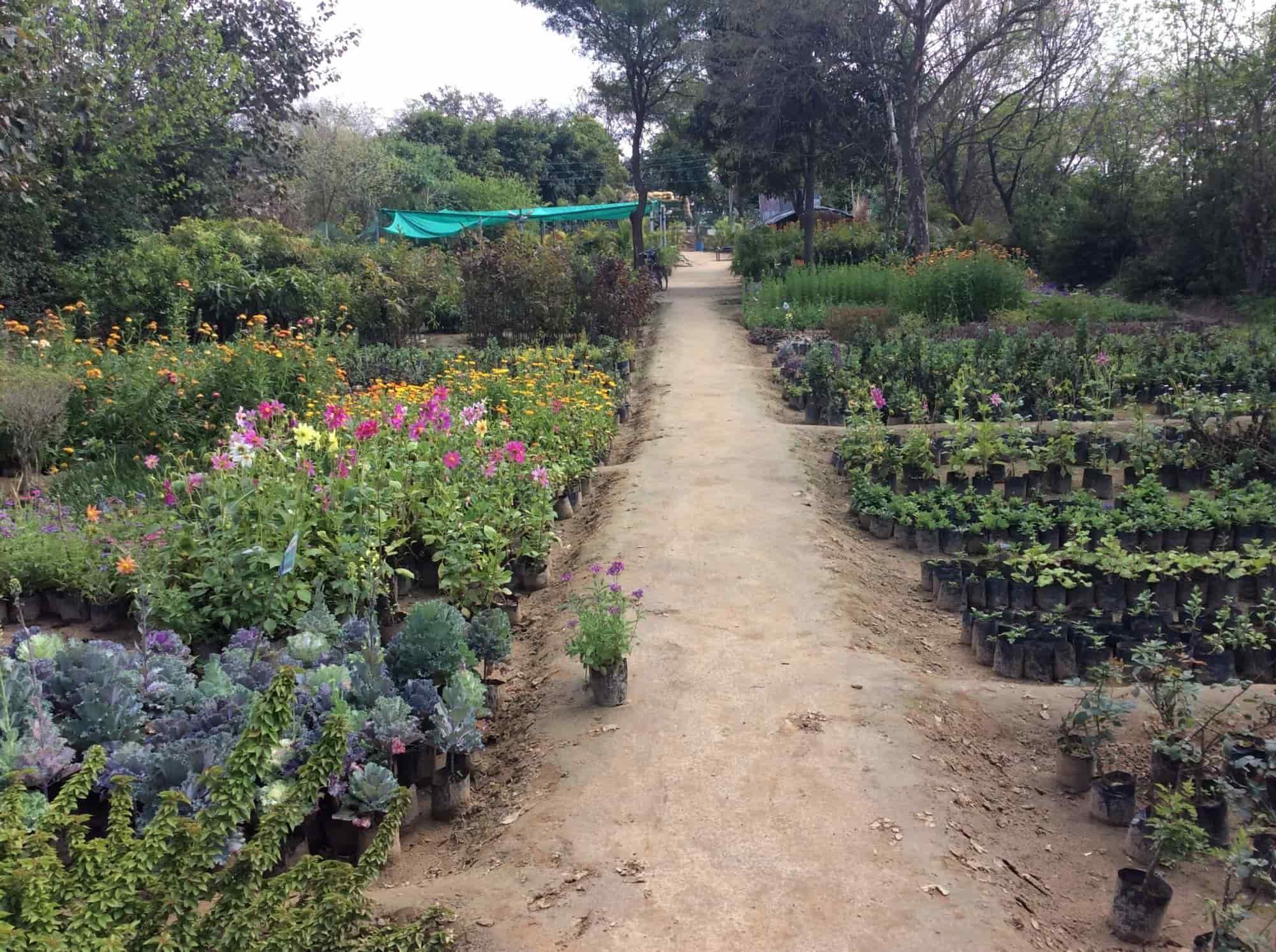 Sekhon Hi Tech Plants World Nursery Baddowal Plant Nurseries In Ludhiana Justdial