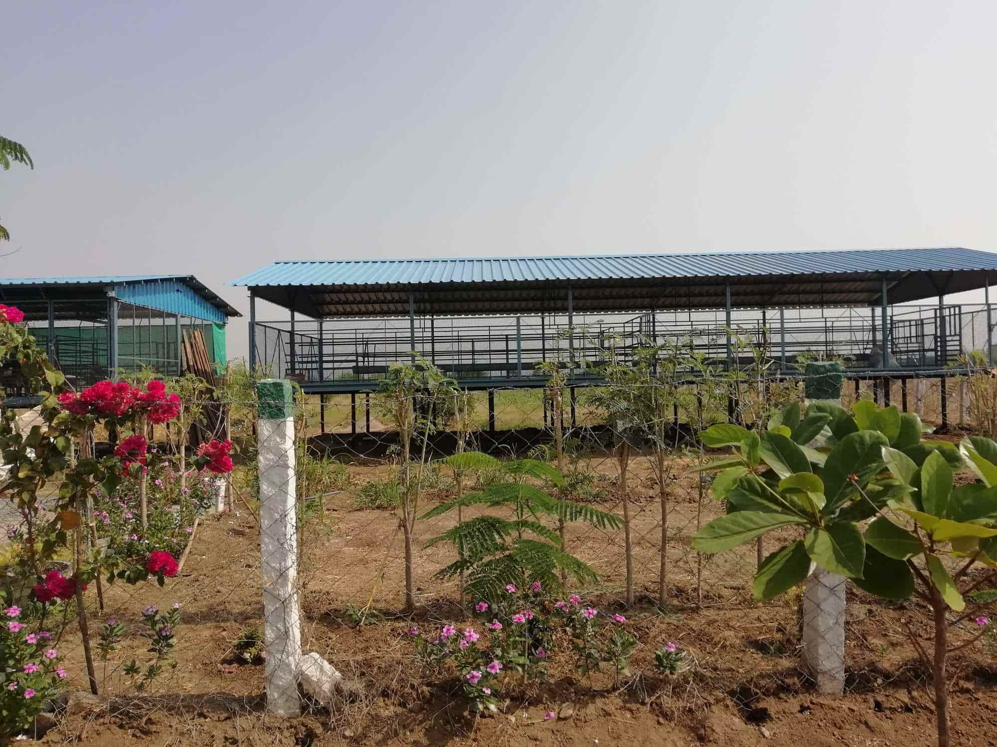 Goats Farm For Sale, Sowdarpatti - Goat Farming in Madurai