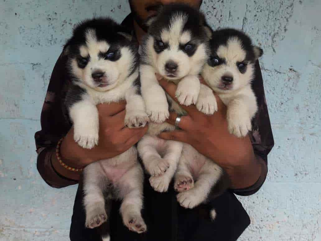 Top 30 Pet Shops For Dog In Mangalore Best Pet Store Justdial