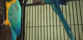 Top 50 Pet Shops For Exotic Birds in Mumbai - Best Pet