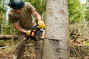 Top 50 Tree Cutting Services in Mumbai - Best Tree Trimming Services -  Justdial