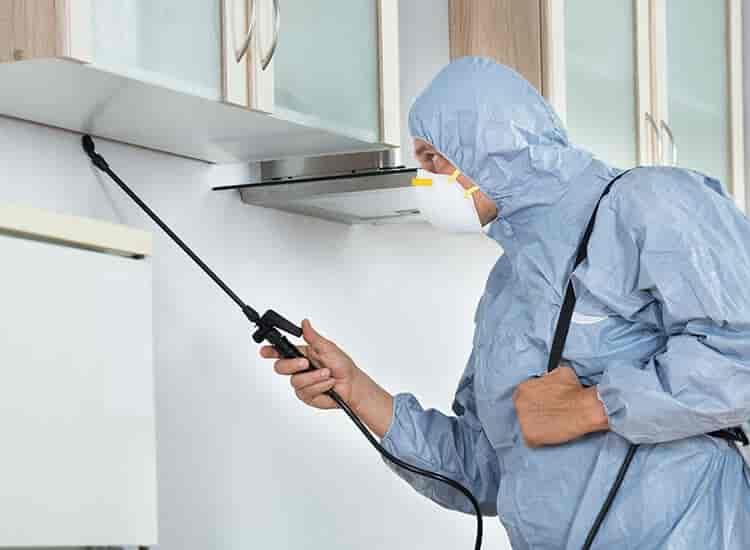 Lora Pest Control, Panvel - Pest Control Services in Navi