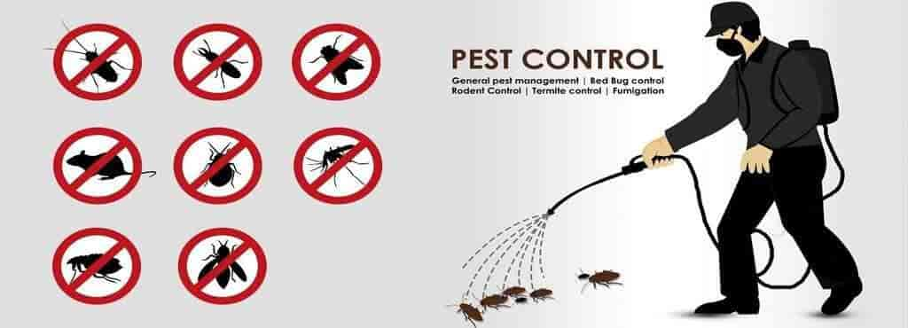 Top 50 Residential Pest Control Services In Mysore Best Pest Control Services Justdial