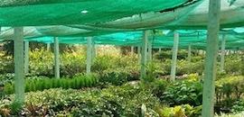Deccan Nursery Farm